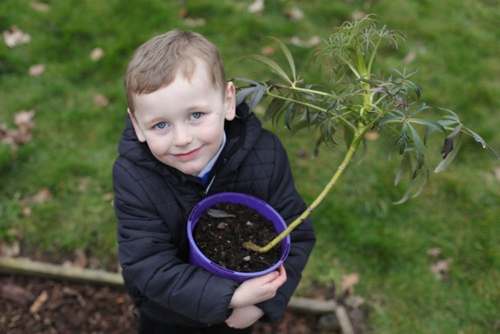 Know Your Roots – potting plants