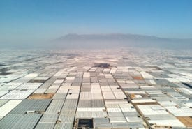 Greenhouses in Almeria supply fruit and veg to UK supermarkets