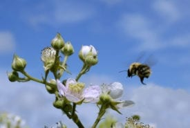New routes for bees